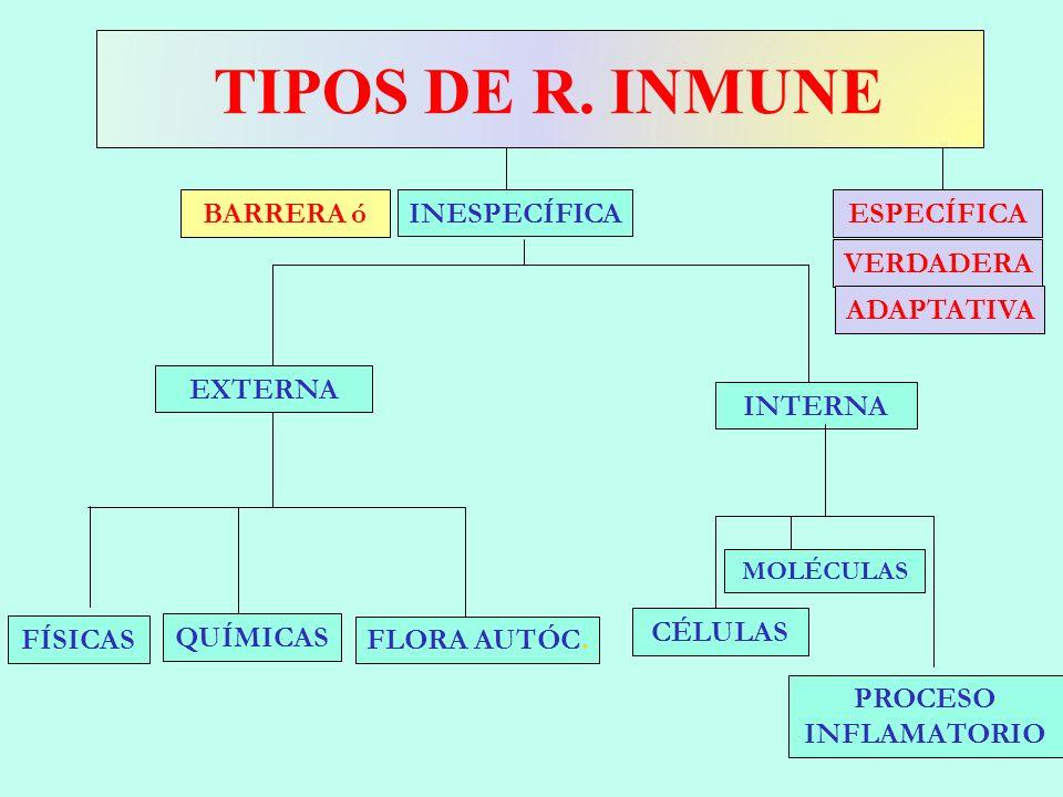 TIPOS DE R. INMUNE EXTERNA INTERNA PROCESO INFLAMATORIO FLORA AUTÓC. FÍSICAS QUÍMICAS INESPECÍFICAESPECÍFICA CÉLULAS VERDADERA ADAPTATIVA MOLÉCULAS BA