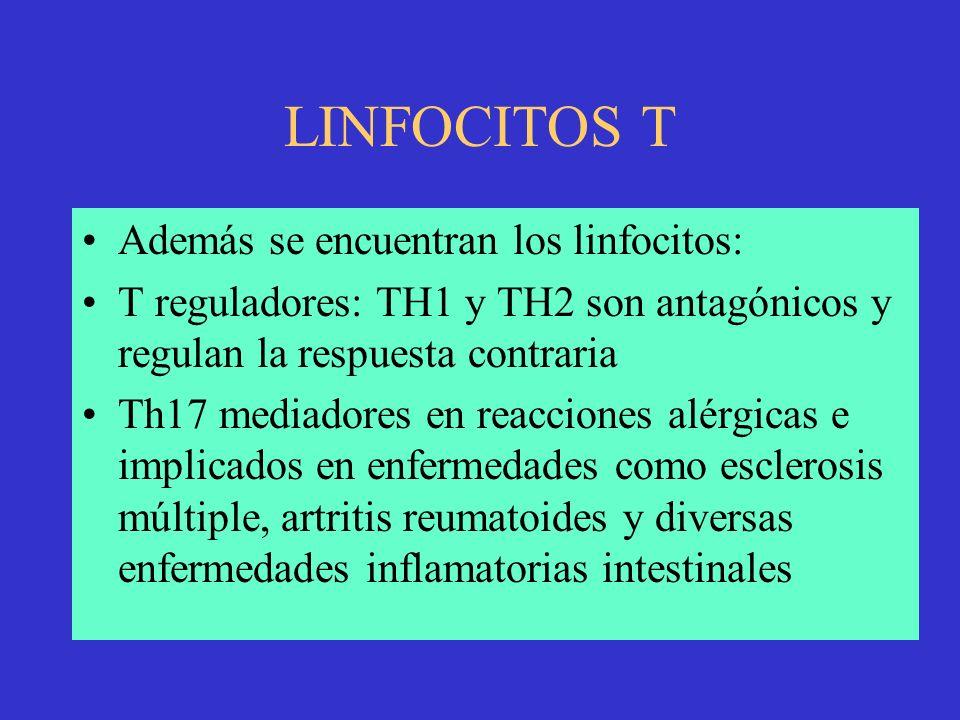 Además se encuentran los linfocitos: T reguladores: TH1 y TH2 son antagónicos y regulan la respuesta contraria Th17 mediadores en reacciones alérgicas
