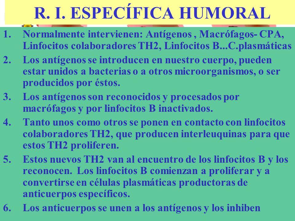 R. I. ESPECÍFICA HUMORAL 1.Normalmente intervienen: Antígenos, Macrófagos- CPA, Linfocitos colaboradores TH2, Linfocitos B...C.plasmáticas 2.Los antíg