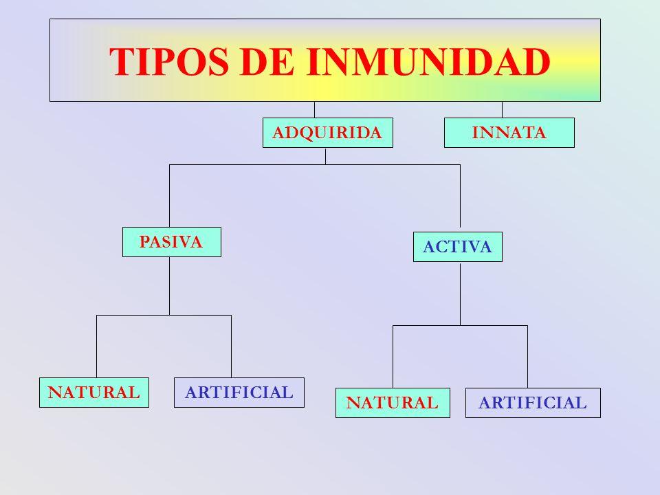 TIPOS DE INMUNIDAD PASIVA ACTIVA ARTIFICIALNATURAL ARTIFICIAL ADQUIRIDAINNATA