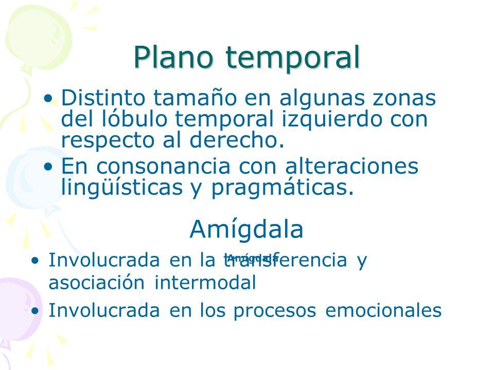 Plano temporal Distinto tamaño en algunas zonas del lóbulo temporal izquierdo con respecto al derecho. En consonancia con alteraciones lingüísticas y