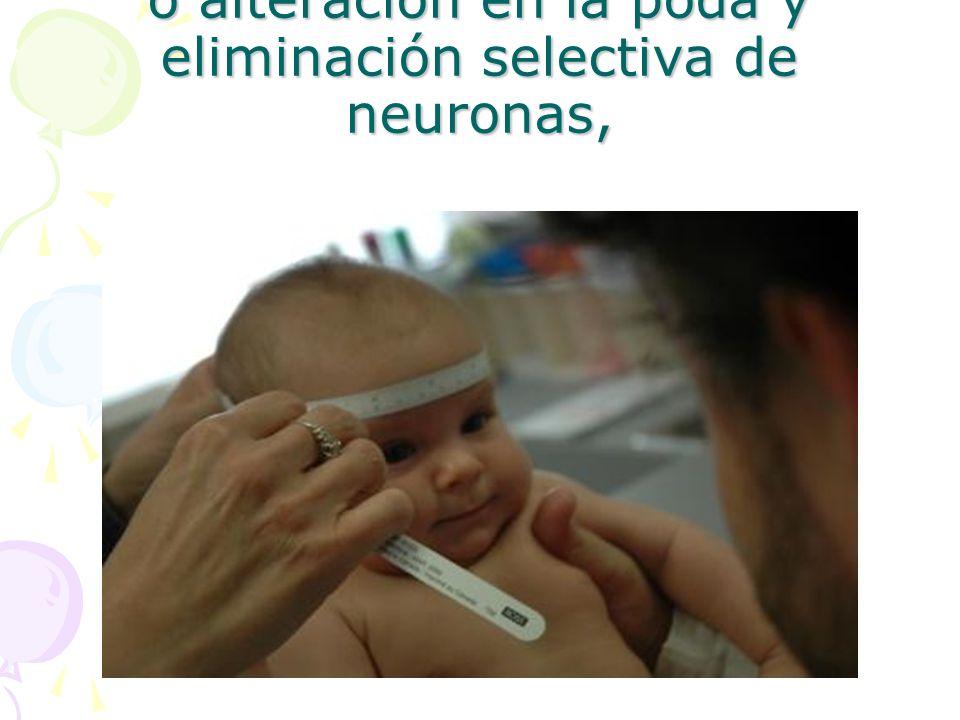 exceso de desarrollo neuronal o alteración en la poda y eliminación selectiva de neuronas,