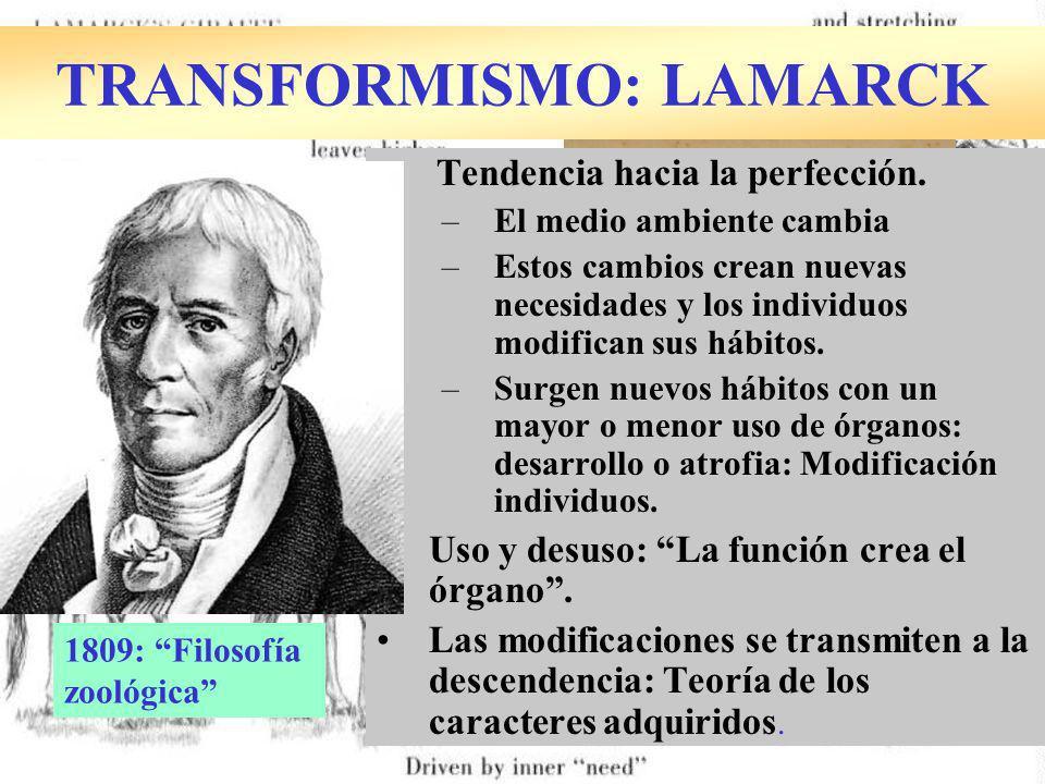 TRANSFORMISMO: LAMARCK Tendencia hacia la perfección. –El medio ambiente cambia –Estos cambios crean nuevas necesidades y los individuos modifican sus