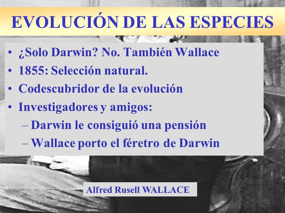 ¿Solo Darwin? No. También Wallace 1855: Selección natural. Codescubridor de la evolución Investigadores y amigos: –Darwin le consiguió una pensión –Wa