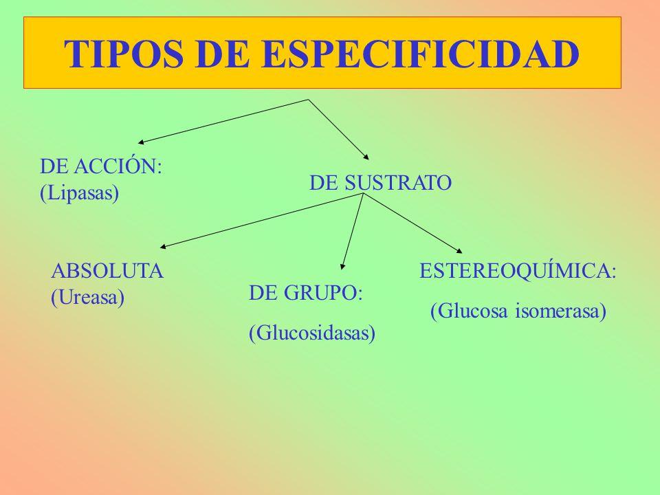 TIPOS DE ESPECIFICIDAD DE ACCIÓN: (Lipasas) ESTEREOQUÍMICA: (Glucosa isomerasa) ABSOLUTA (Ureasa) DE GRUPO: (Glucosidasas) DE SUSTRATO