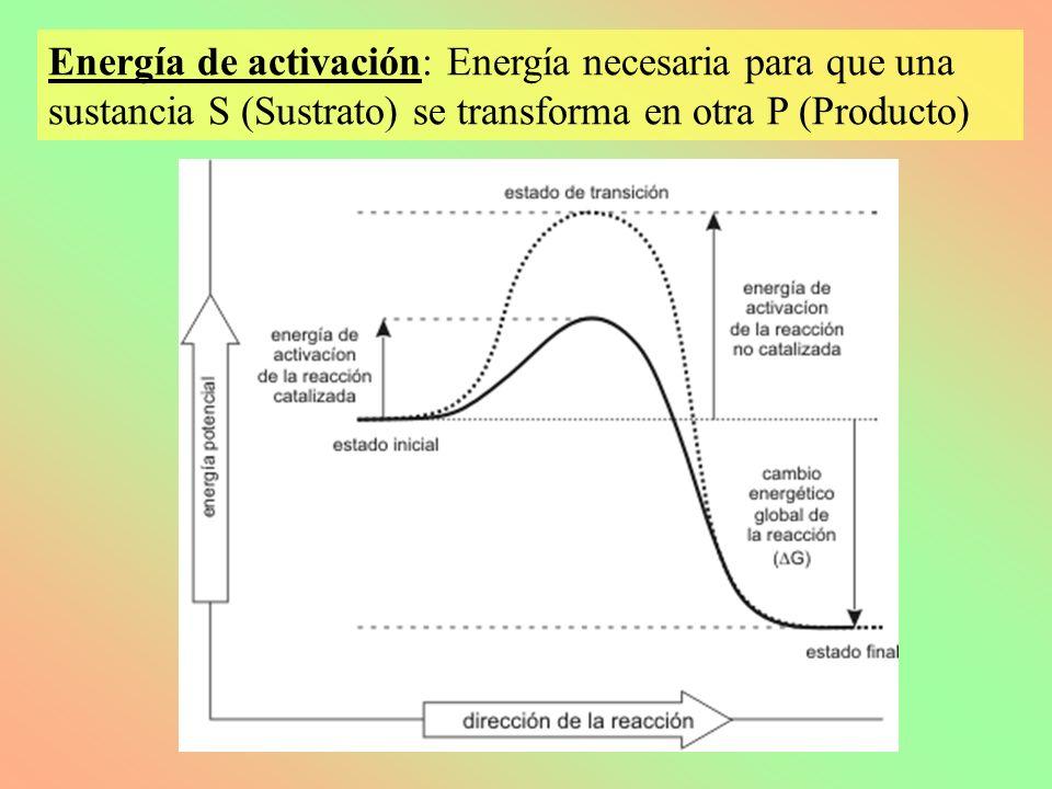 Energía de activación: Energía necesaria para que una sustancia S (Sustrato) se transforma en otra P (Producto)