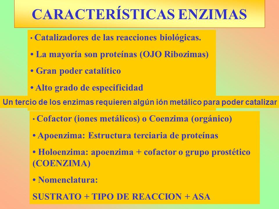 Cofactor (iones metálicos) o Coenzima (orgánico) Apoenzima: Estructura terciaria de proteínas Holoenzima: apoenzima + cofactor o grupo prostético (COE