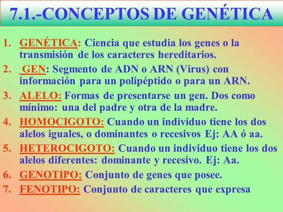 1.GENÉTICA: Ciencia que estudia los genes o la transmisión de los caracteres hereditarios. 2. GEN: Segmento de ADN o ARN (Virus) con información para