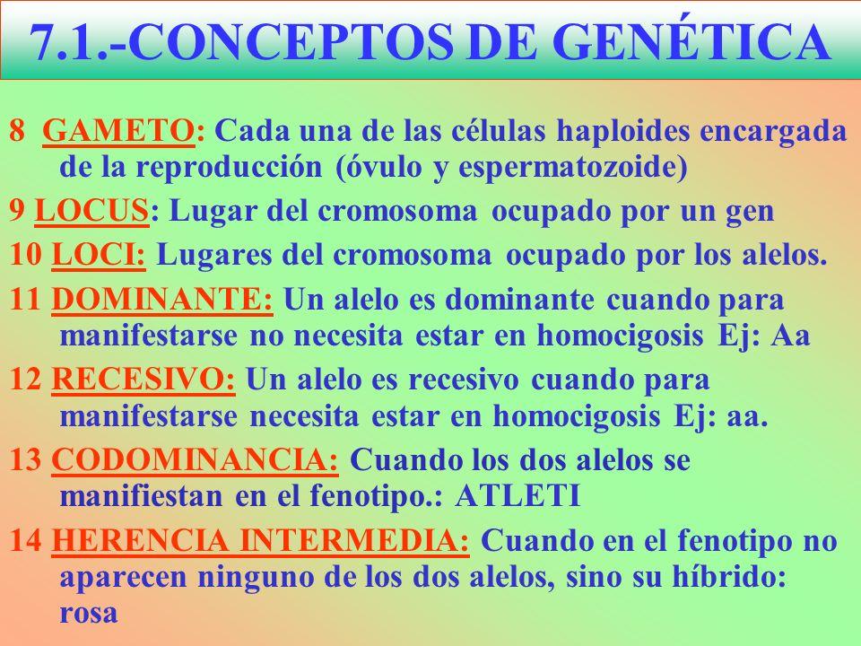 8 GAMETO: Cada una de las células haploides encargada de la reproducción (óvulo y espermatozoide) 9 LOCUS: Lugar del cromosoma ocupado por un gen 10 L