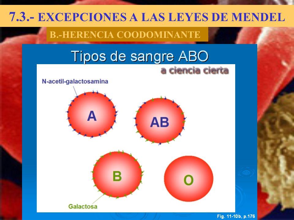 7.3.- EXCEPCIONES A LAS LEYES DE MENDEL B.-HERENCIA COODOMINANTE