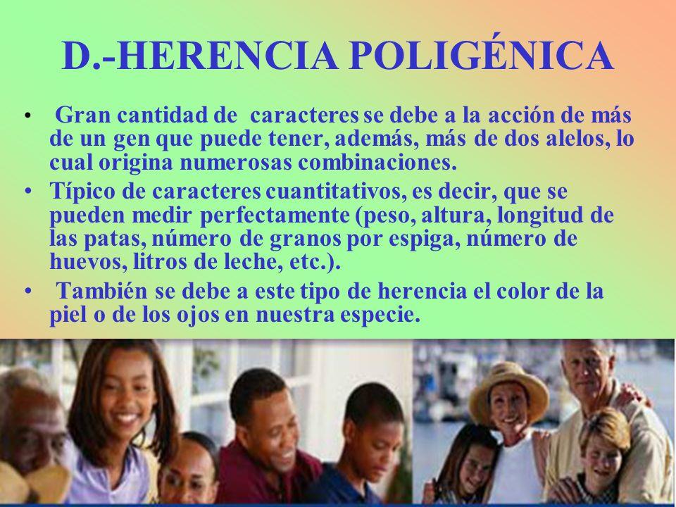 D.-HERENCIA POLIGÉNICA Gran cantidad de caracteres se debe a la acción de más de un gen que puede tener, además, más de dos alelos, lo cual origina nu