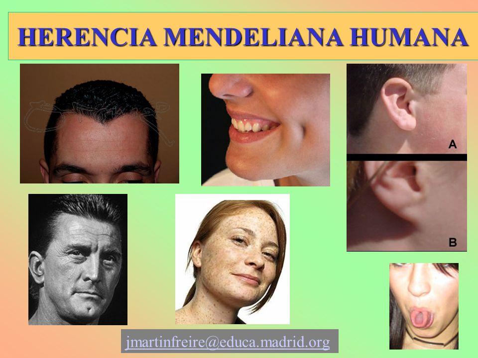 HERENCIA MENDELIANA HUMANA jmartinfreire@educa.madrid.org