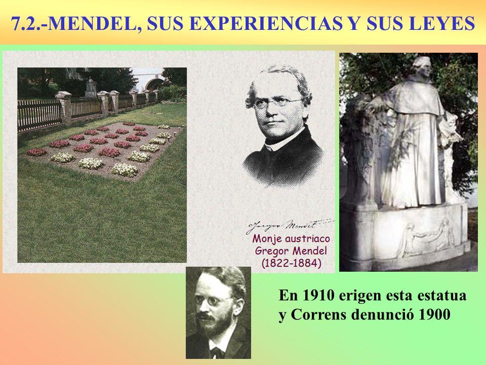 7.2.-MENDEL, SUS EXPERIENCIAS Y SUS LEYES En 1910 erigen esta estatua y Correns denunció 1900