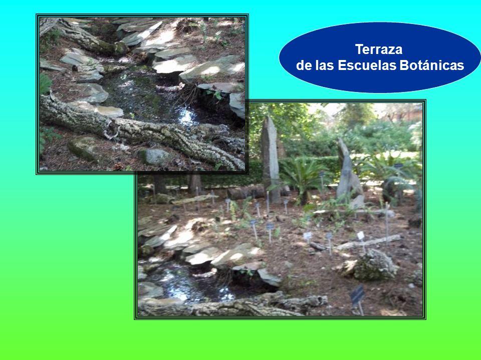 Terraza de las Escuelas Botánicas