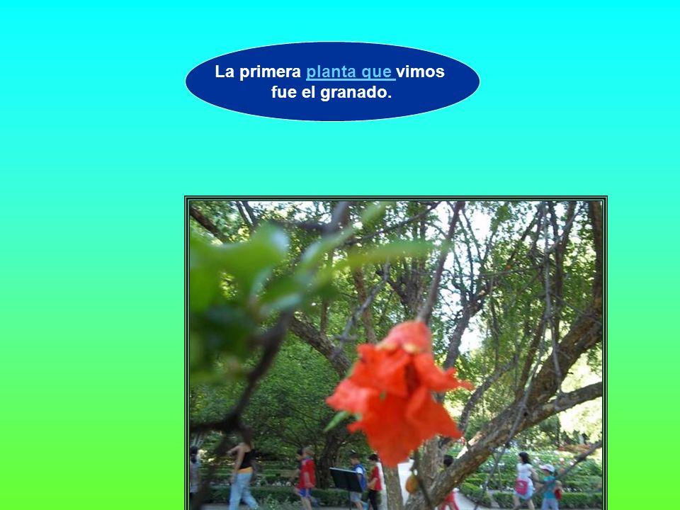La primera planta que vimos fue el granado.