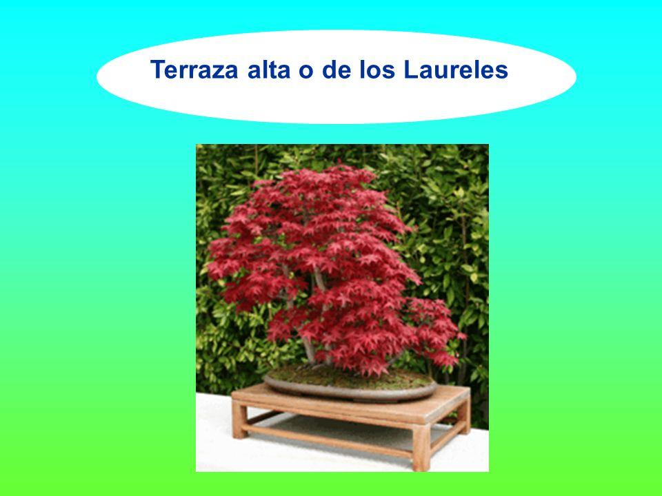 Terraza alta o de los Laureles