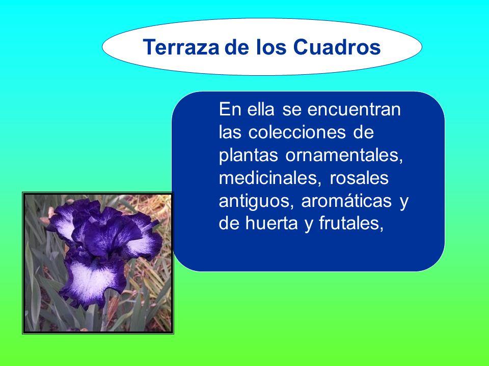 En ella se encuentran las colecciones de plantas ornamentales, medicinales, rosales antiguos, aromáticas y de huerta y frutales, Terraza de los Cuadros