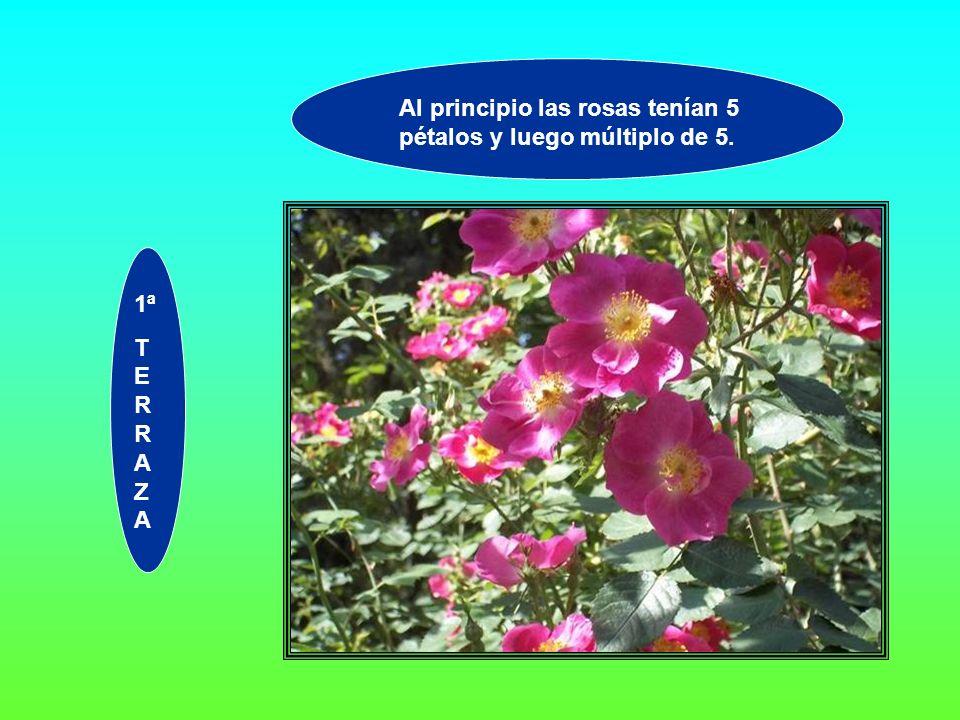 Al principio las rosas tenían 5 pétalos y luego múltiplo de 5. 1ª T E R R A Z A