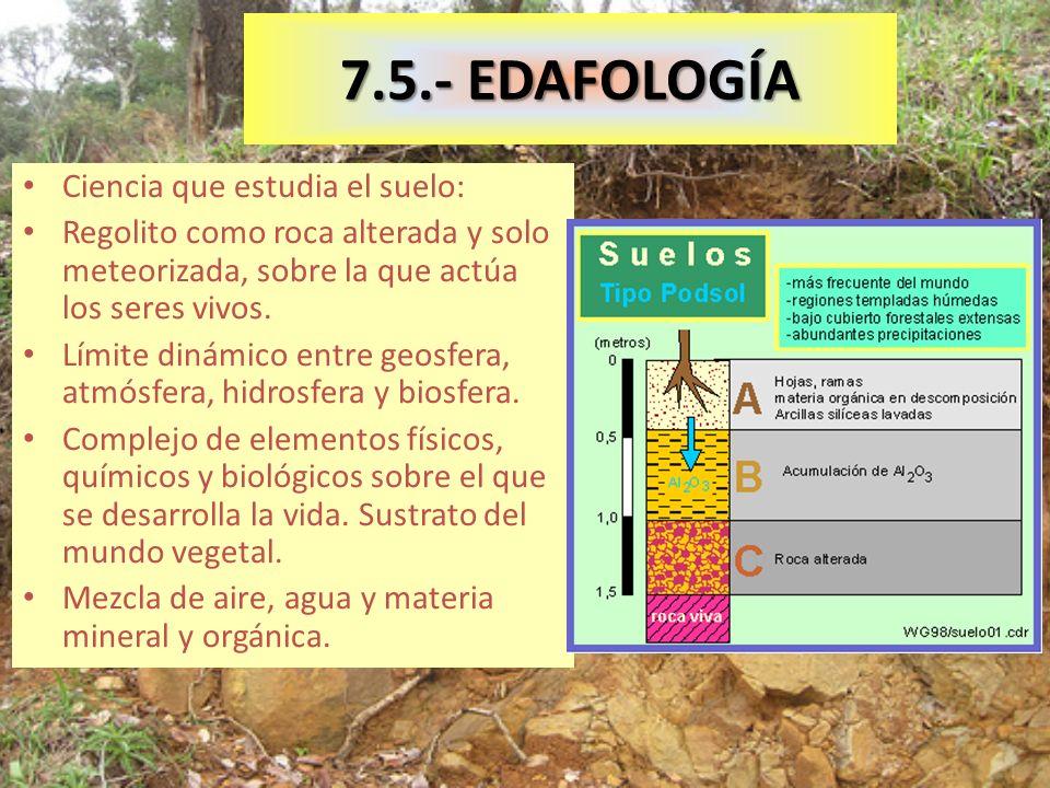 7.5.- EDAFOLOGÍA Ciencia que estudia el suelo: Regolito como roca alterada y solo meteorizada, sobre la que actúa los seres vivos.
