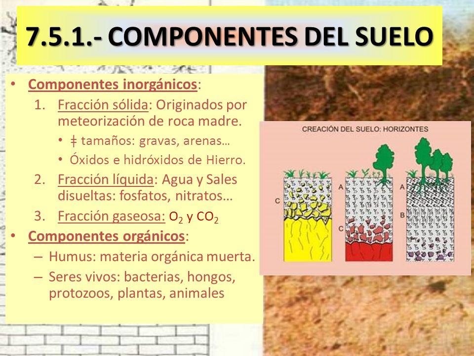 7.5.1.- COMPONENTES DEL SUELO Componentes inorgánicos: 1.Fracción sólida: Originados por meteorización de roca madre.