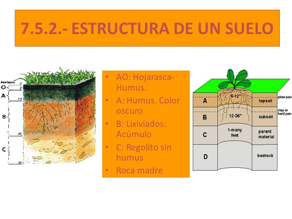 7.5.2.- ESTRUCTURA DE UN SUELO AO: Hojarasca- Humus.
