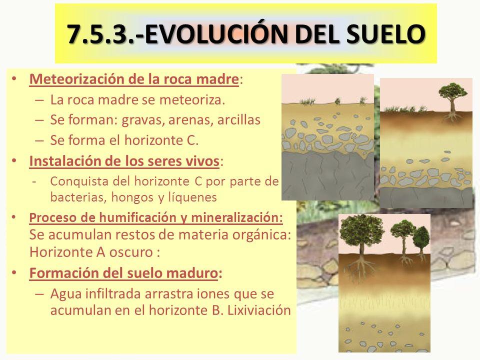 7.5.3.-EVOLUCIÓN DEL SUELO Meteorización de la roca madre: – La roca madre se meteoriza.