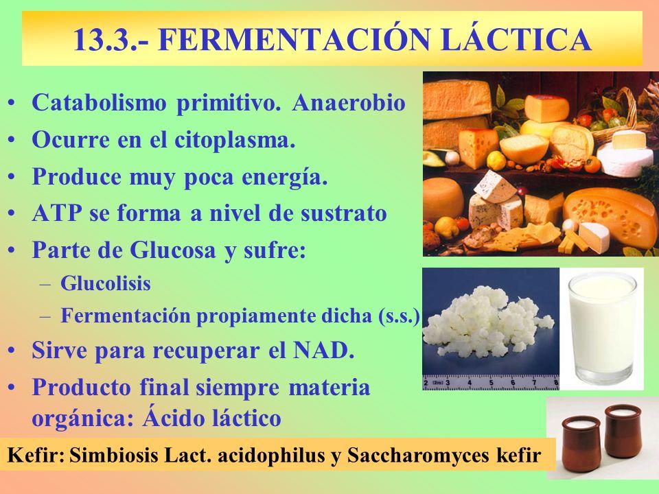 13.3.- FERMENTACIÓN LÁCTICA Catabolismo primitivo. Anaerobio Ocurre en el citoplasma. Produce muy poca energía. ATP se forma a nivel de sustrato Parte