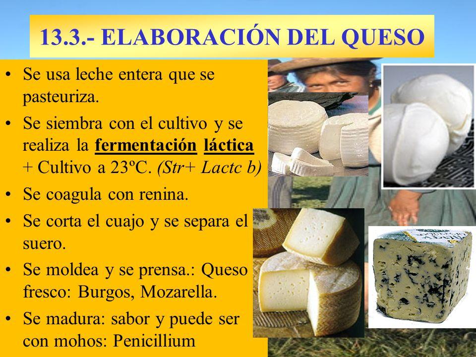 13.3.- ELABORACIÓN DEL QUESO Se usa leche entera que se pasteuriza. Se siembra con el cultivo y se realiza la fermentación láctica + Cultivo a 23ºC. (
