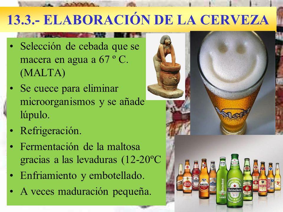 13.3.- ELABORACIÓN DE LA CERVEZA Selección de cebada que se macera en agua a 67 º C. (MALTA) Se cuece para eliminar microorganismos y se añade lúpulo.