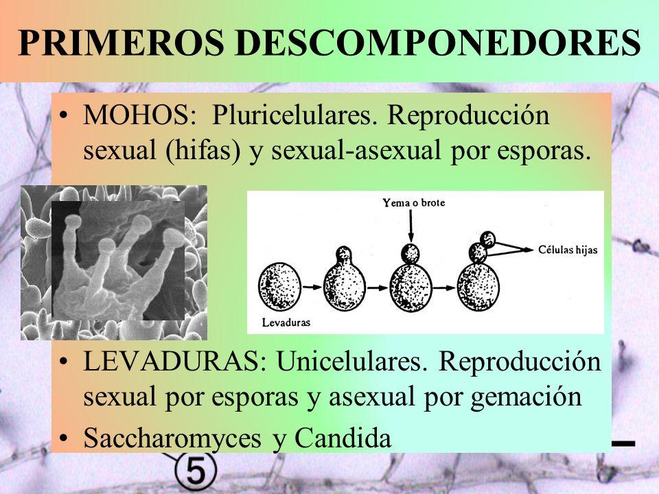 13.1.- CICLOS BIOGEOQUÍMICOS