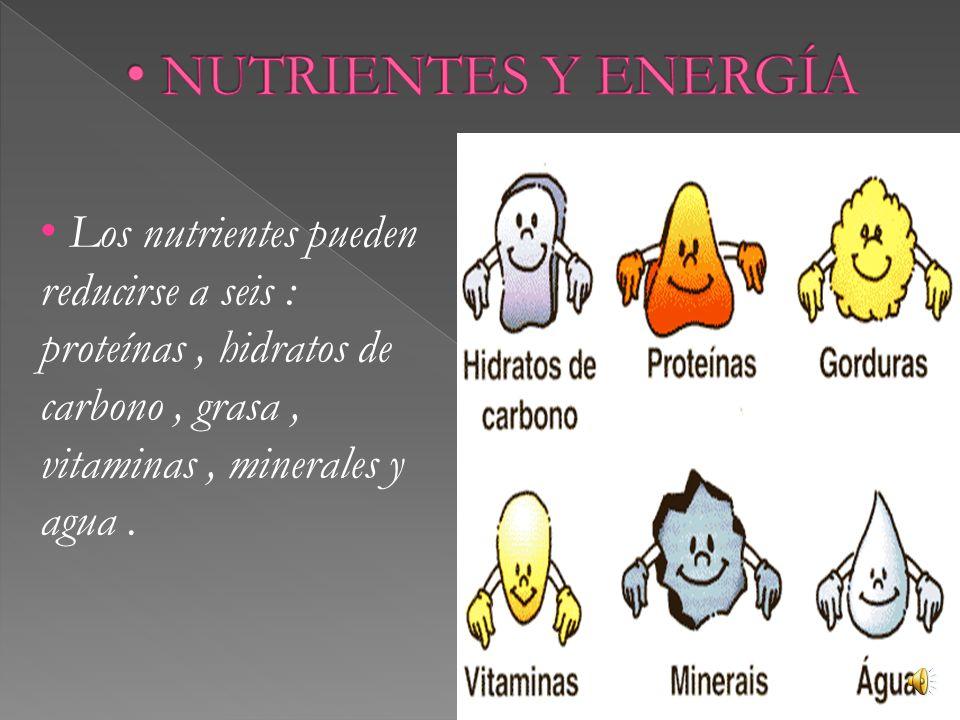 Los nutrientes pueden reducirse a seis : proteínas, hidratos de carbono, grasa, vitaminas, minerales y agua.