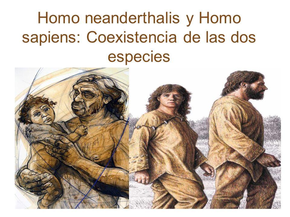 Extinción Universidad del Estado de Arizona Avanzada tecnología mortífera (sapiens) 71.000 años Comportamiento social y cooperativo (sapiens) Ventaja neanderthalis carecían de armas proyectil