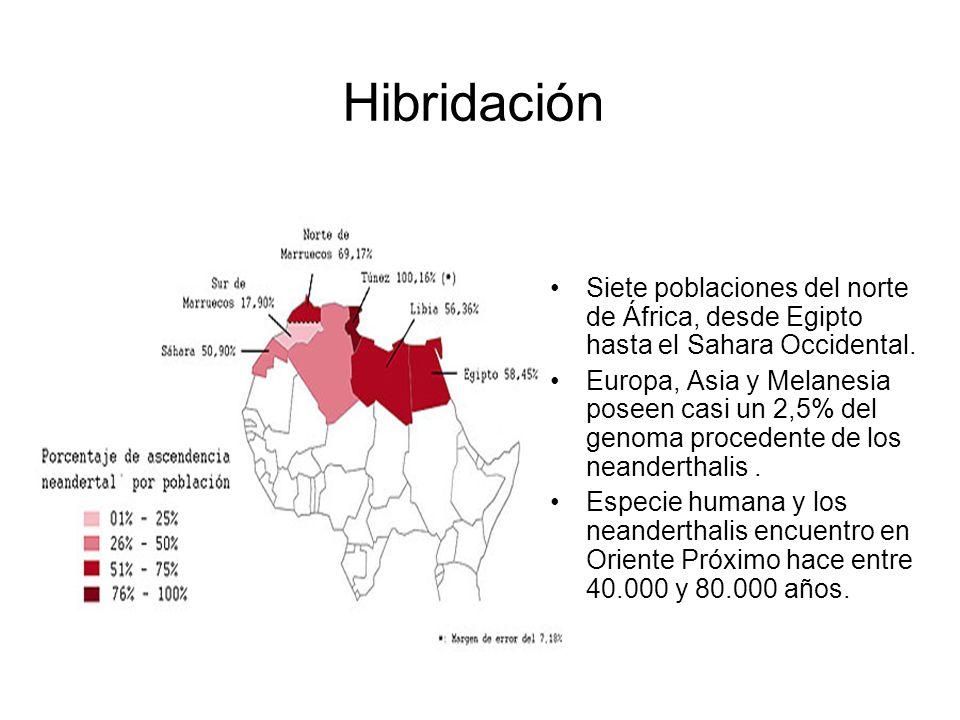 Hibridación Siete poblaciones del norte de África, desde Egipto hasta el Sahara Occidental. Europa, Asia y Melanesia poseen casi un 2,5% del genoma pr