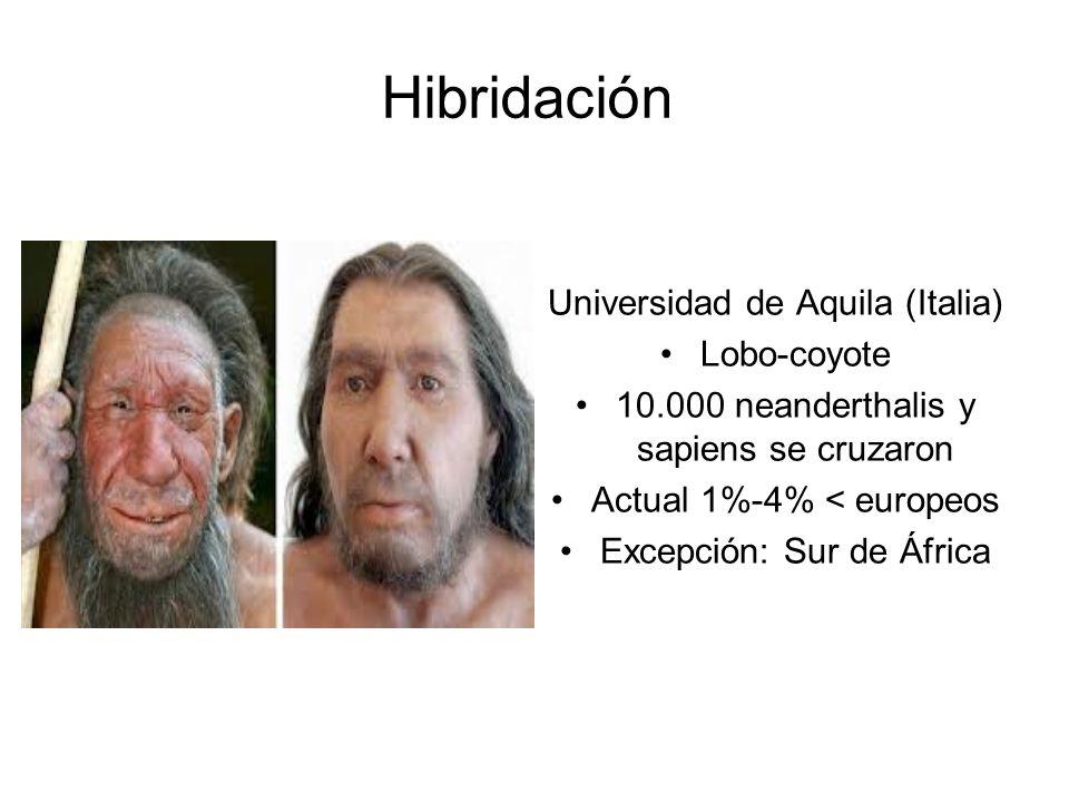 Hibridación Universidad de Aquila (Italia) Lobo-coyote 10.000 neanderthalis y sapiens se cruzaron Actual 1%-4% < europeos Excepción: Sur de África