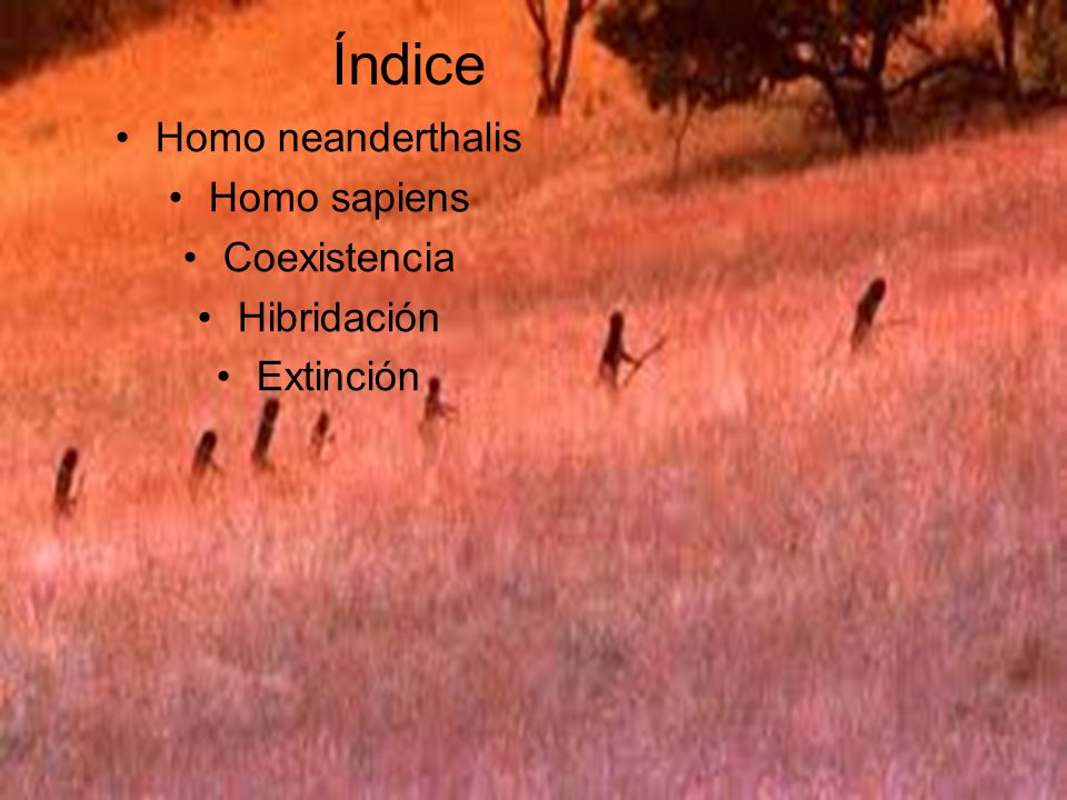Índice Homo neanderthalis Homo sapiens Coexistencia Hibridación Extinción