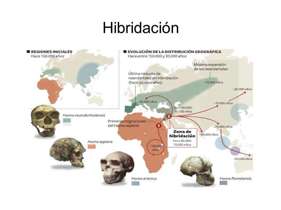 Arizona State University - puntos azules asentamientos Homo sapiens, puntos rojos asentamientos de Homo neanderthalis y puntos amarillos asentamientos de los híbridos.