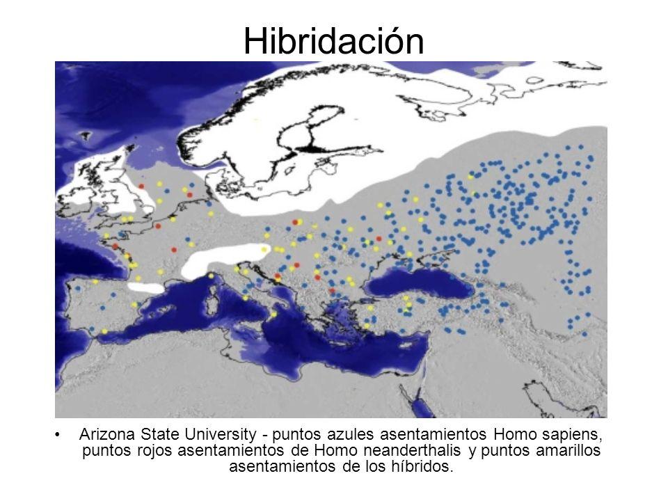 Arizona State University - puntos azules asentamientos Homo sapiens, puntos rojos asentamientos de Homo neanderthalis y puntos amarillos asentamientos