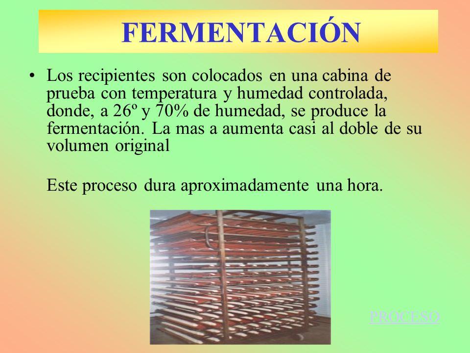 Los recipientes son colocados en una cabina de prueba con temperatura y humedad controlada, donde, a 26º y 70% de humedad, se produce la fermentación.