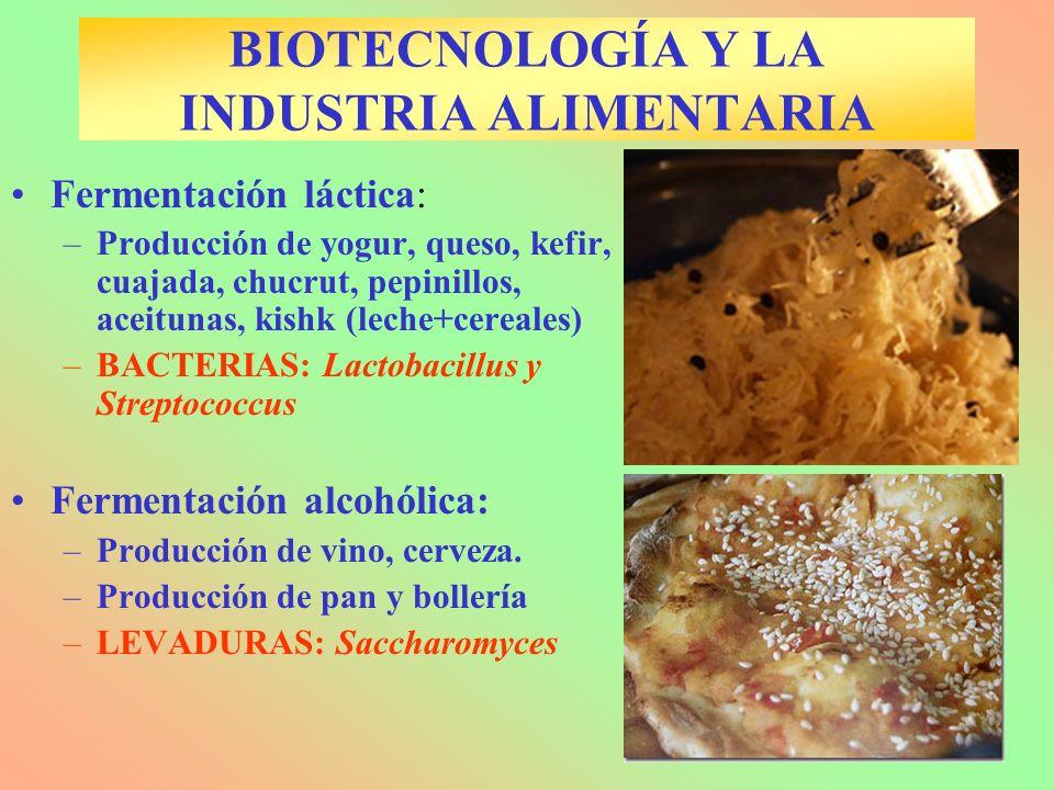 BIOTECNOLOGÍA Y LA INDUSTRIA ALIMENTARIA Fermentación láctica: –Producción de yogur, queso, kefir, cuajada, chucrut, pepinillos, aceitunas, kishk (lec