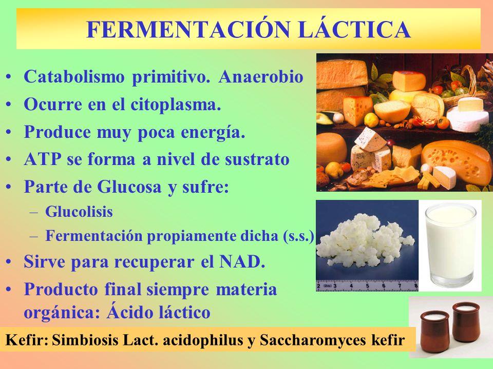 FERMENTACIÓN LÁCTICA Catabolismo primitivo. Anaerobio Ocurre en el citoplasma. Produce muy poca energía. ATP se forma a nivel de sustrato Parte de Glu