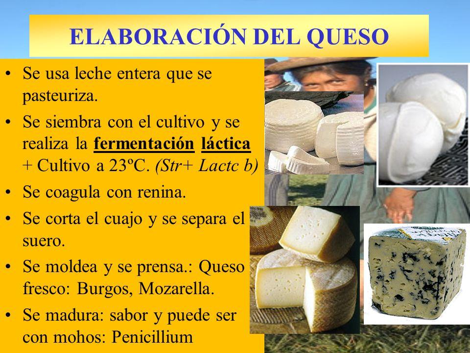 ELABORACIÓN DEL QUESO Se usa leche entera que se pasteuriza. Se siembra con el cultivo y se realiza la fermentación láctica + Cultivo a 23ºC. (Str+ La