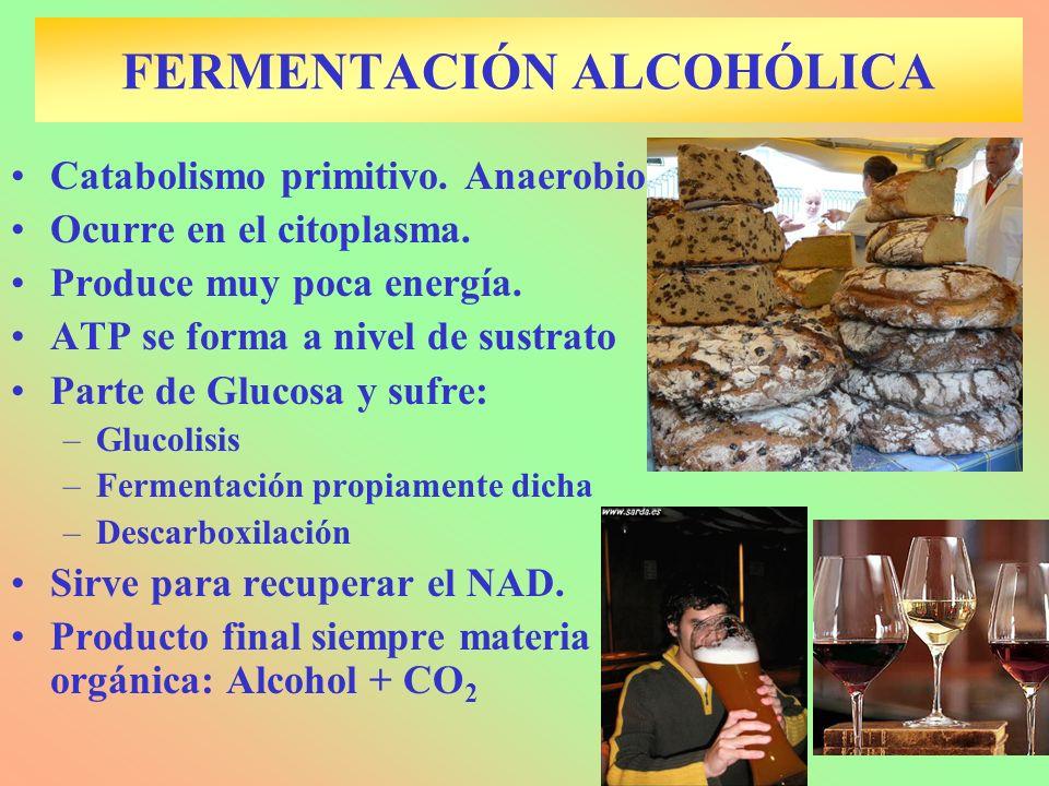 FERMENTACIÓN ALCOHÓLICA Catabolismo primitivo. Anaerobio Ocurre en el citoplasma. Produce muy poca energía. ATP se forma a nivel de sustrato Parte de