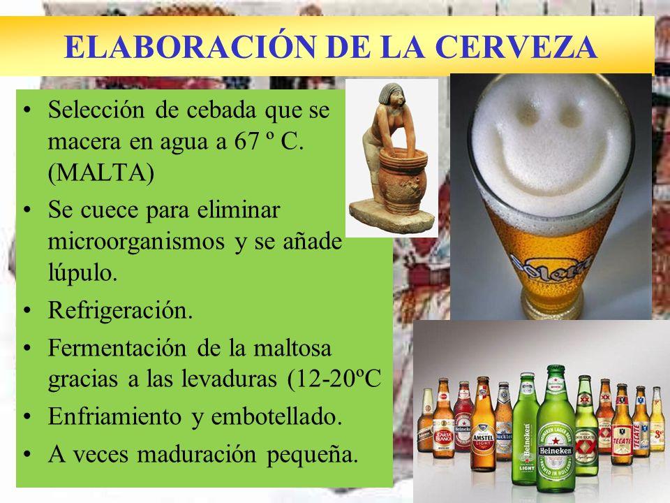 ELABORACIÓN DE LA CERVEZA Selección de cebada que se macera en agua a 67 º C. (MALTA) Se cuece para eliminar microorganismos y se añade lúpulo. Refrig