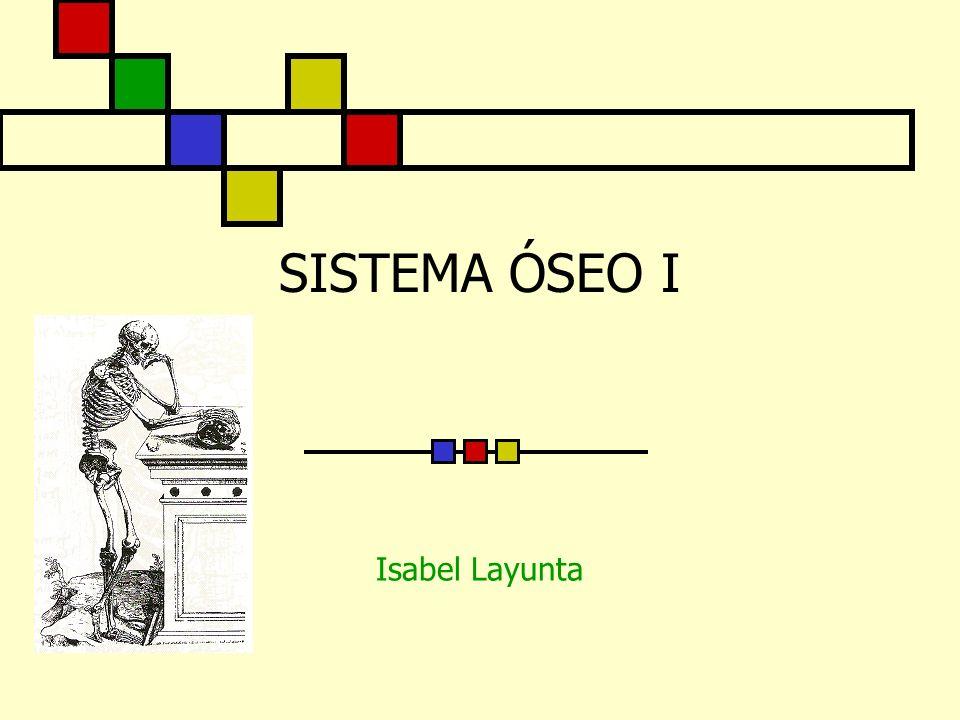 SISTEMA ÓSEO I Isabel Layunta