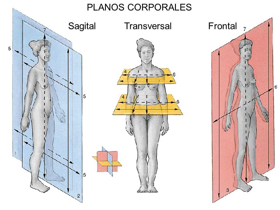 PLANOS CORPORALES SagitalTransversalFrontal