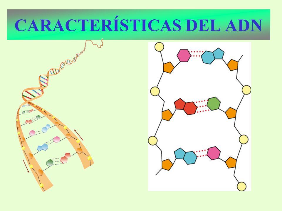 TÉCNICAS DE INGENIERÍA GENÉTICA PCR Mullis: Nobel 1993