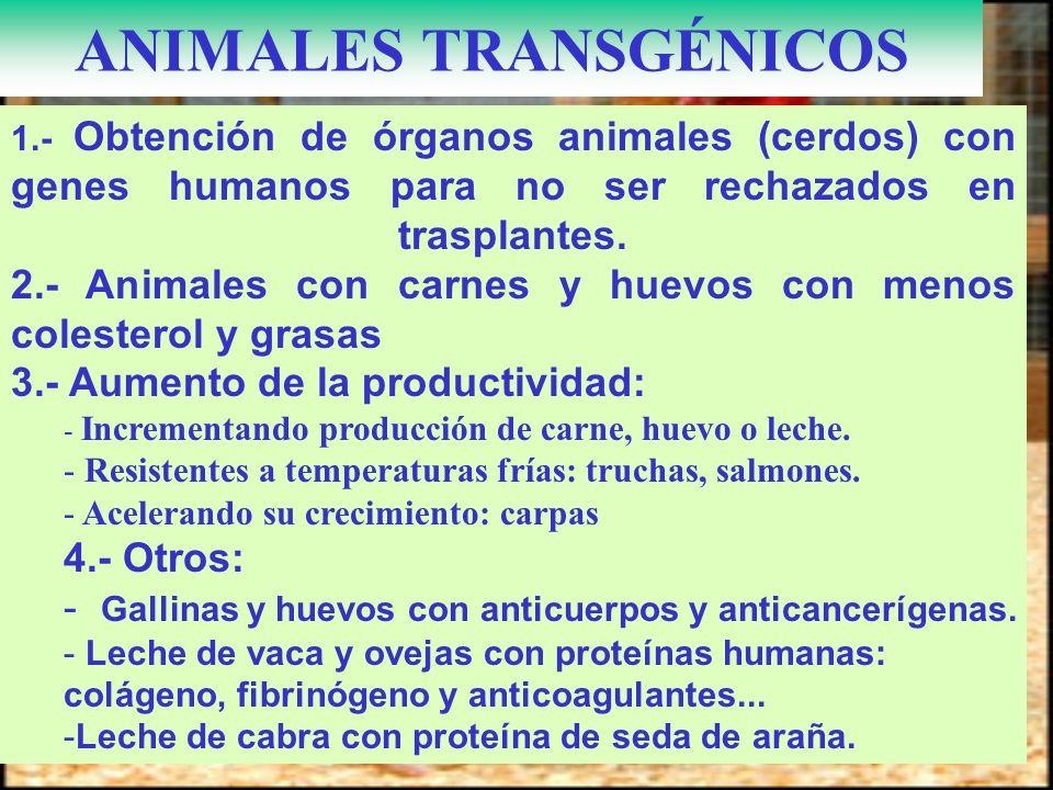 1.- Obtención de órganos animales (cerdos) con genes humanos para no ser rechazados en trasplantes. 2.- Animales con carnes y huevos con menos coleste