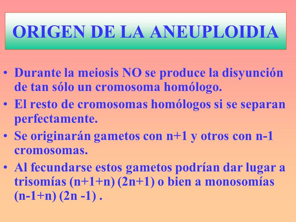 ORIGEN DE LA ANEUPLOIDIA Durante la meiosis NO se produce la disyunción de tan sólo un cromosoma homólogo. El resto de cromosomas homólogos si se sepa