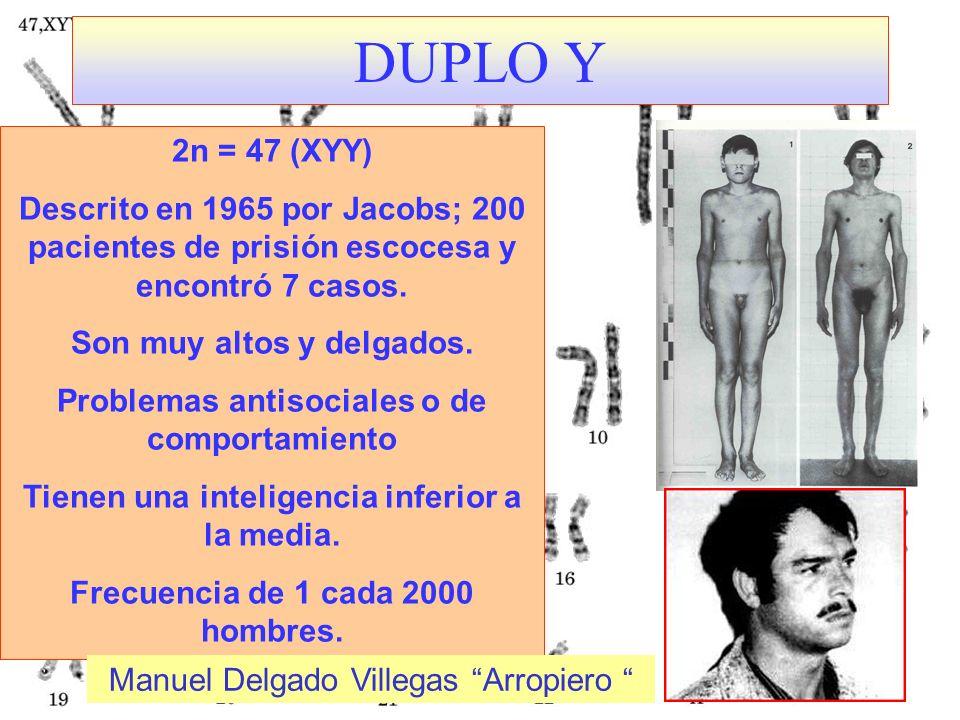 DUPLO Y 2n = 47 (XYY) Descrito en 1965 por Jacobs; 200 pacientes de prisión escocesa y encontró 7 casos. Son muy altos y delgados. Problemas antisocia