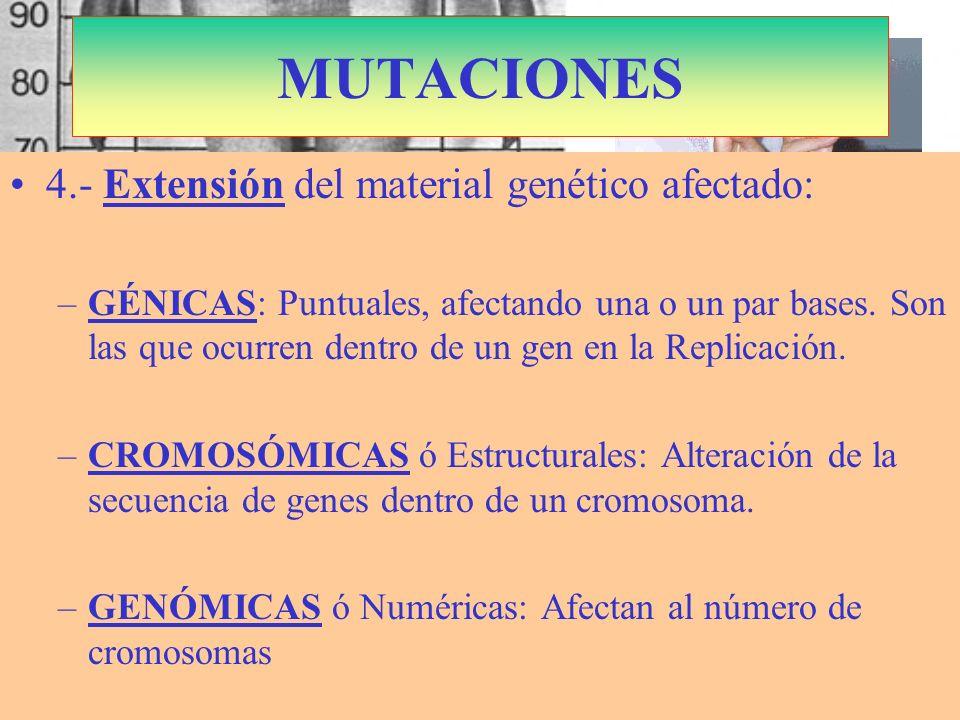 S. Marfán: Cromosoma 15 Dominante Fibrilina MUTACIONES 4.- Extensión del material genético afectado: –GÉNICAS: Puntuales, afectando una o un par bases
